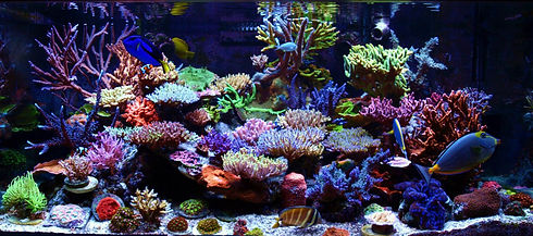 Aquarium Services SF Bay Area