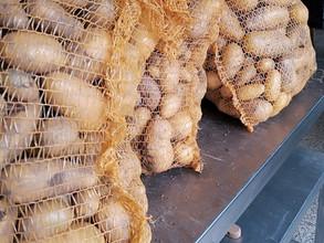 Les pommes de terre nouvelles sont là !