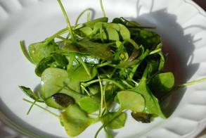 Salade de pourpier d'hiver ( Clayton de Cuba ) au curcuma et graines de courge