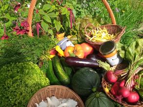 Avec le soleil c'est le plein de légumes au jardin