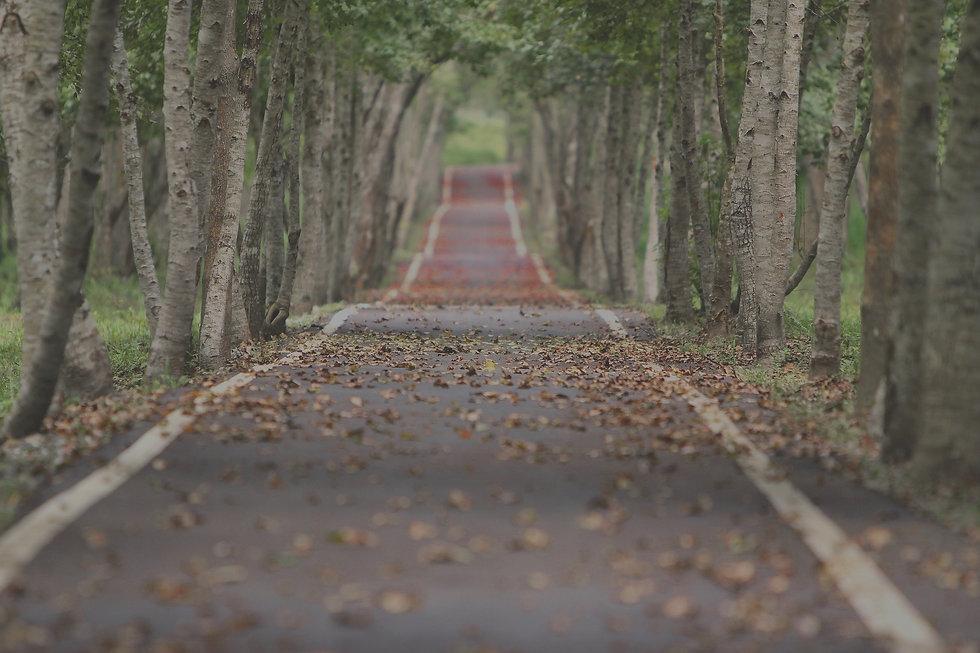 Rustige provinciale weg bedekt met bladeren als rustige achtergrond