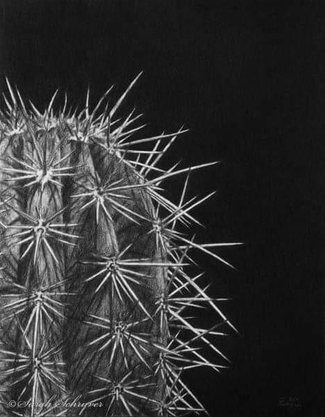 """""""Cactaceae"""""""