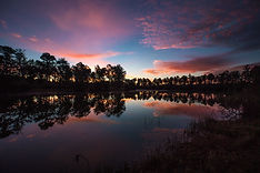 Palmetto Lake-4.jpg