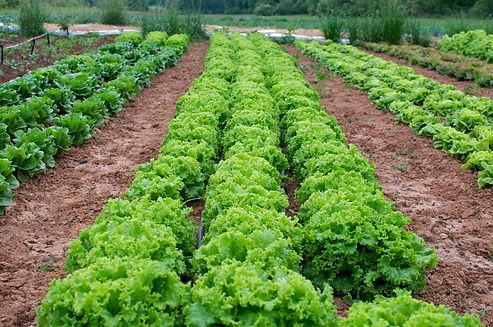 local seasonal produce grown near Greenville SC in Upstate South Carolina