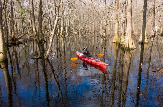 Swamp copy 2.jpg