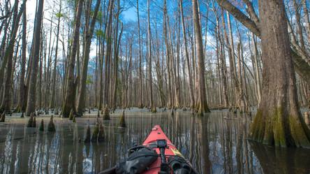 Swamp-2.jpg