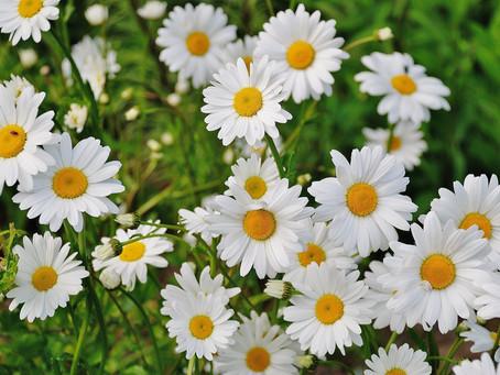 התחדשות אביב