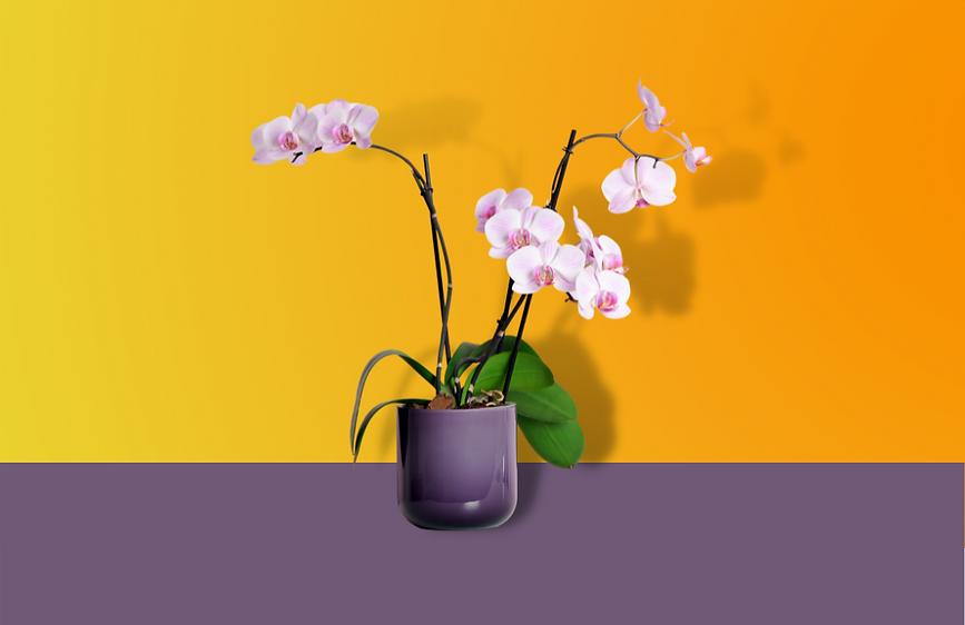 orquideas2.png