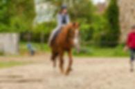 cheval et cavalière en confiance
