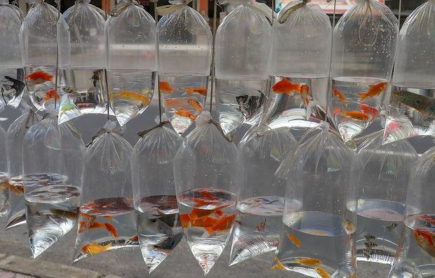 Different fishes for aquarium in plastic