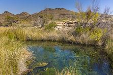 A desert spring harbors endangered pupfi