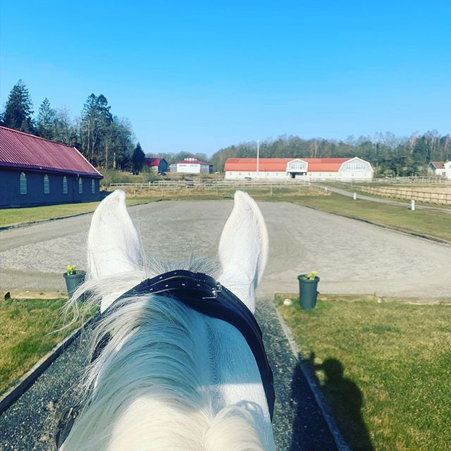 Morning glory! 🤩🙏🏻 #venadressage  #ve