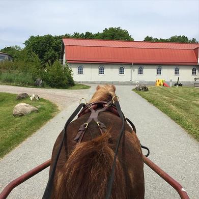 Alla hästar jobbas inte uppsuttet. 🐎😄☀