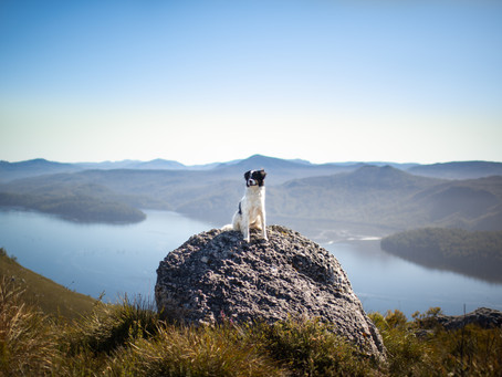 Here's why you and your dog should visit Tullah, on the West Coast of Tasmania!