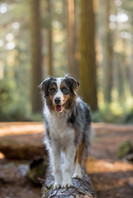 Shy Wolf Photography (3 of 24).jpg