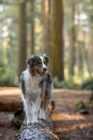 Shy Wolf Photography (4 of 24).jpg
