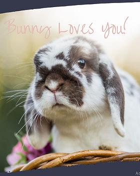 Bunnies for stories! (5 of 6).jpg