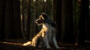 Shy Wolf Photography (15 of 24).jpg