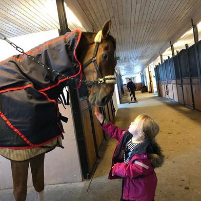 Fina ponnyer får morötter av stallets pr