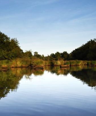 Reflet d'arbres dans un étang