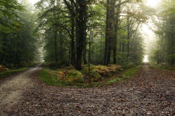 Croisement de chemins forestiers