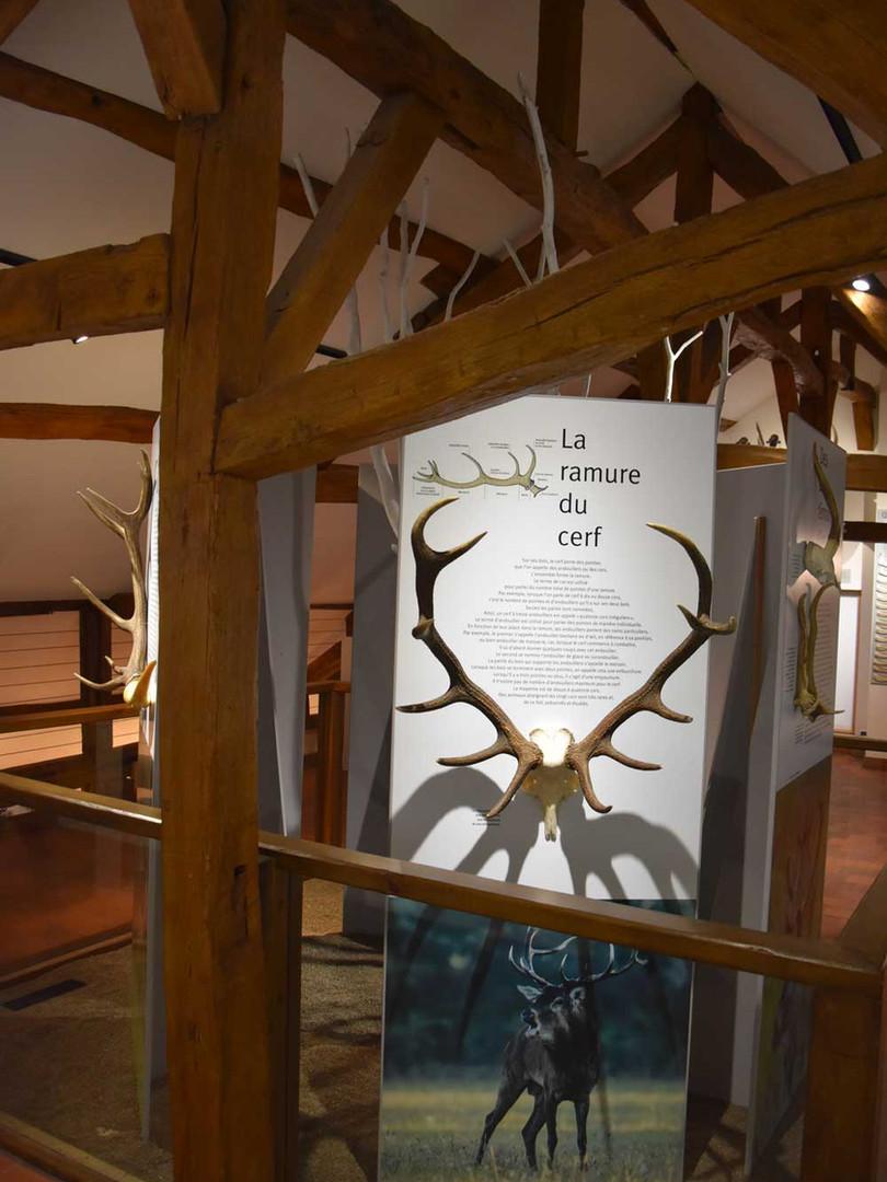 Maison du Cerf exposition permanente