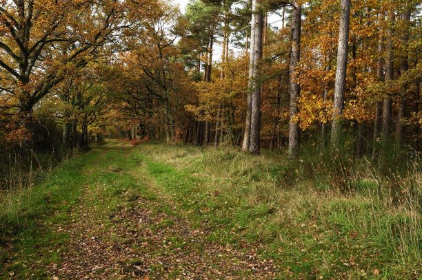 Chemin de randonnée en forêt