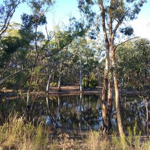 Climate adaptation in my backyard - #3: Capturing Rainwater
