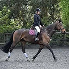 Debbie - Aria Dressage horse riding  .JPG