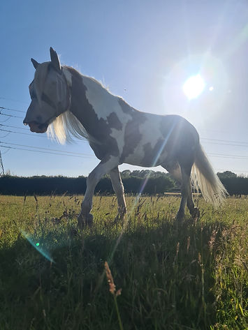 Alfie in Field Summer jpg.jpg