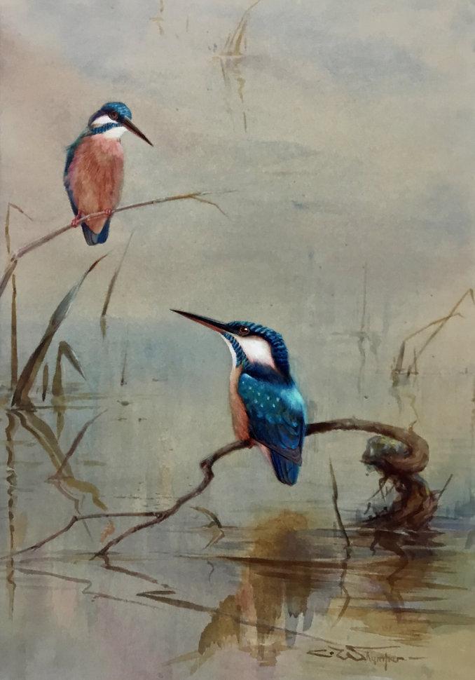 Charles Whymper (1853 - 1941) Kingfishers.jpg