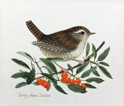SHIRLEY ANNE JOHNSON