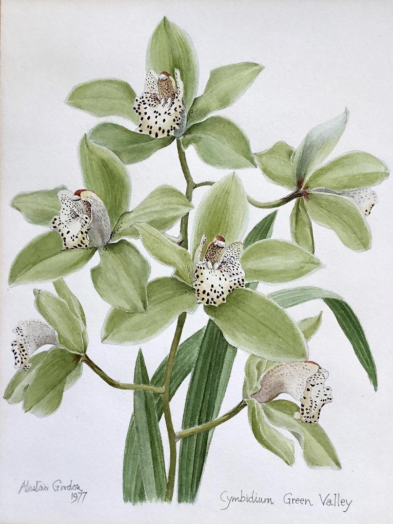 Alastair Gordon watercolour botanical