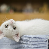 kitten-1285341_1280.webp