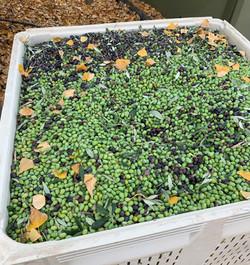 olives_edited.jpg
