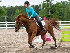 community-horses.png