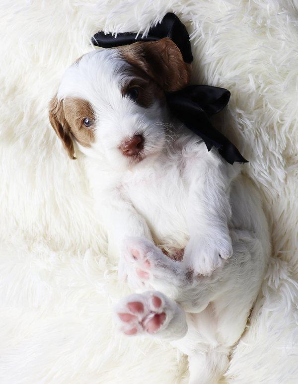 pup date_edited.jpg
