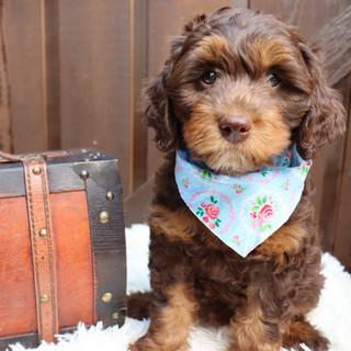 Pup Date.JPG