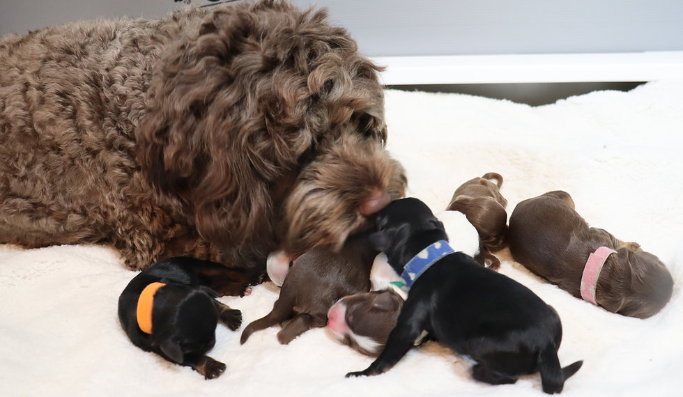 a Momma and pups.jpg