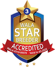 Chilliwack Labradoodles Accredited Logo