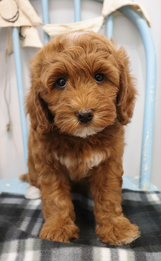 Pup Dates_edited.jpg
