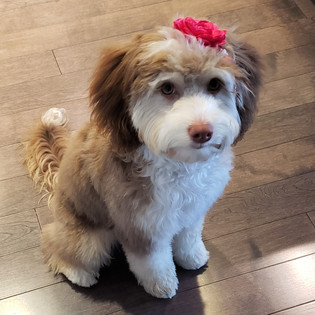 Six months old after her first groom.jpg