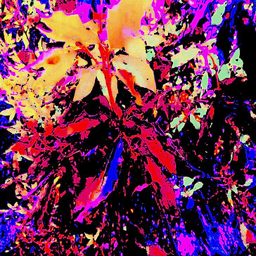 BLOOM ANUBIS artwork.jpg