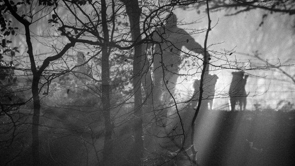 Misty Morning Encounter