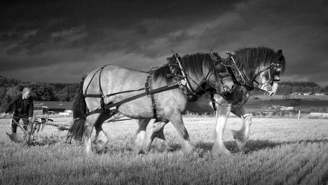 Scottish Ploughing Championships