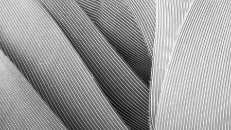 Seagull Wing (detail) Clashach Cove