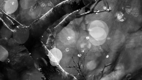 Rain in Assynt