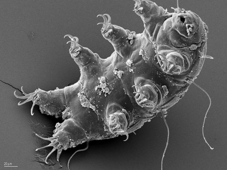 Wait... Tardigrades are real AND they SURVIVED SPACE?!