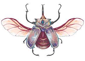 escarabajogris.jpg