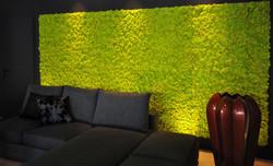 Ściany z mchu stabilizowanego